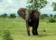 ivory-coast_removal