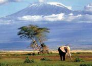 move_to_tanzania